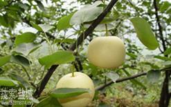 江苏常绿园果业开发公司